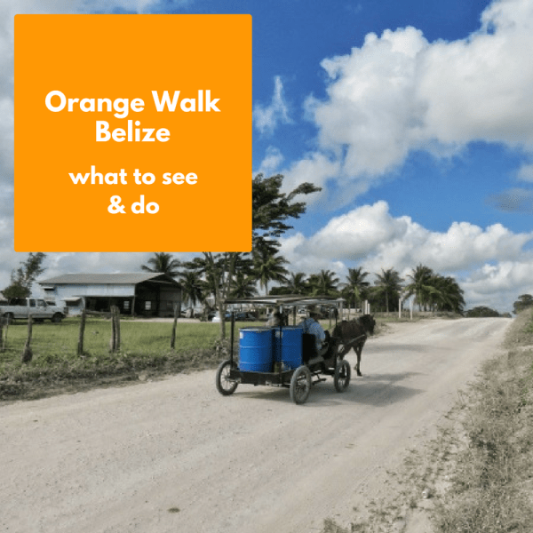 What is there to see and do in Orange Walk, Belize? Let me show you a few excellent tours.