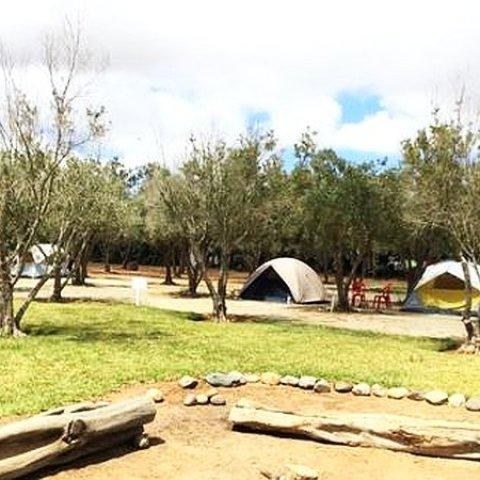 Parque Los Olivos