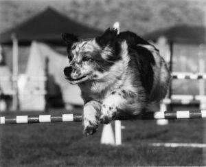 roland-jumping-bw