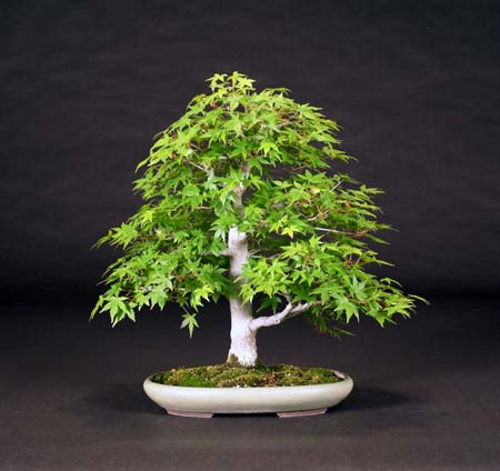 You are currently viewing 2010 Bonsai Show
