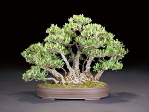 Read more about the article 2011 Bonsai Show