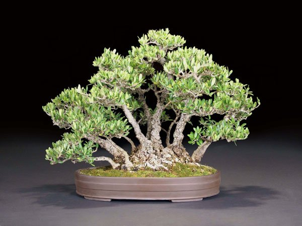 You are currently viewing 2011 Bonsai Show