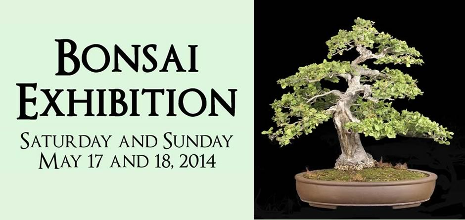 You are currently viewing SB Bonsai Club Exhibition – 2014