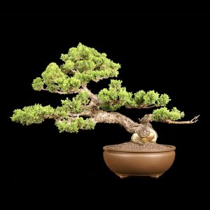 Read more about the article 2013 Bonsai Show