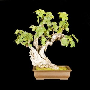 Read more about the article 2015 Bonsai Show