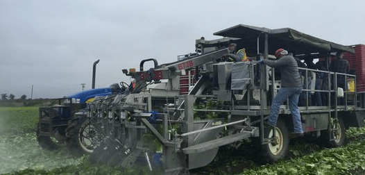 Taylor Farms looks to new technologies to attract millennial workers