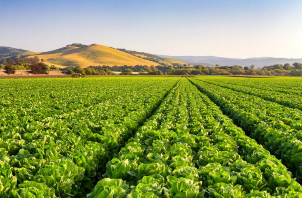 How Salinas went from salad bowl of the world to global agtech hub