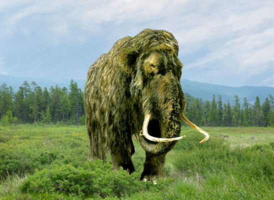 Should we bring back the Woolly Mammoth?