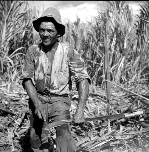 Obrero de las fincas de caña de azúcar