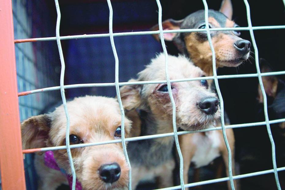 Aprovado projeto que proíbe sacrifício de cães e gatos no país