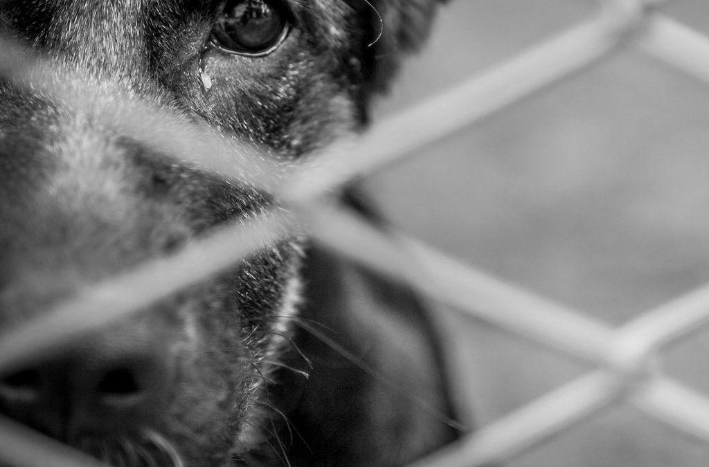 MG: Nova lei obriga veterinários a notificar à polícia maus-tratos
