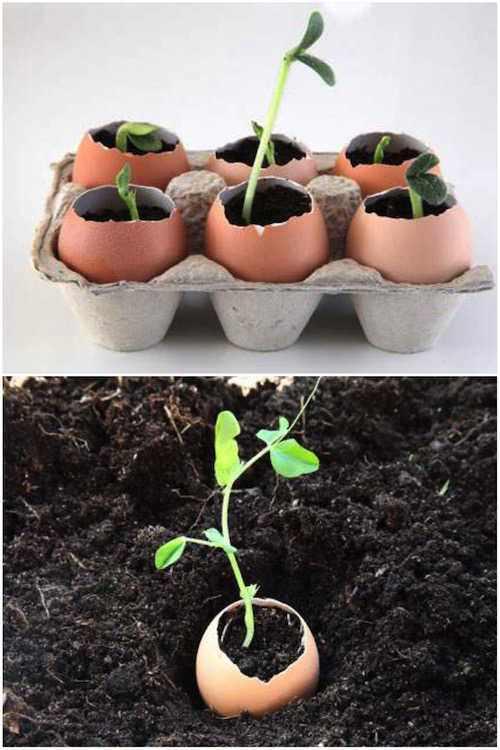 commencer-semis-dans-coquilles-oeufs