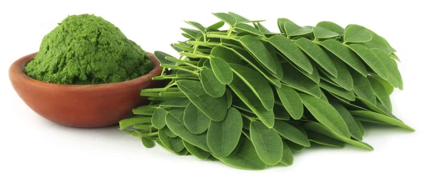Le Moringa efficace contre la croissance tumorale et le ...