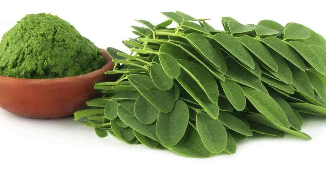 Le Moringa efficace contre la croissance tumorale et le cancer