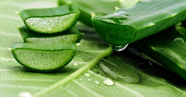 Utilisation de l'Aloe Vera pour une peau lisse et impeccable