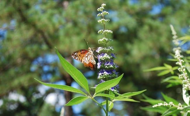 Herbes pour réduire les  saignements abondants