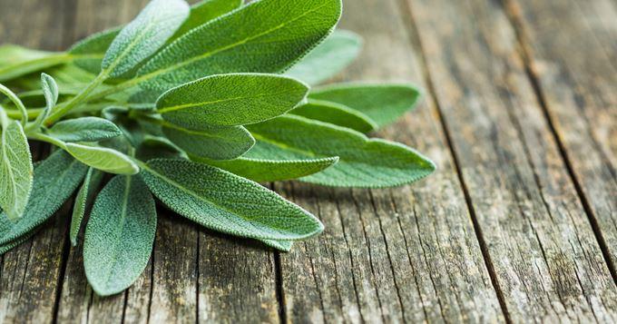 Remèdes à base de plantes contre le ronflement