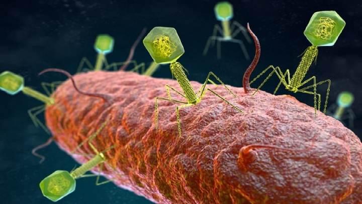 Les 12 virus les plus meurtriers sur Terre et comment ils sont transmis