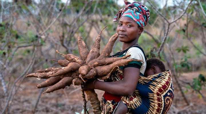 Bienfait du manioc pour la santé (Diabète, Tension artérielle, Cancer ETC)