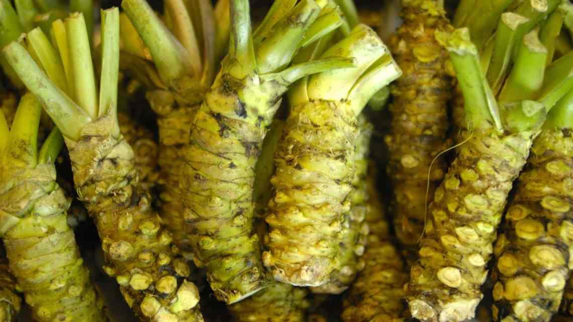 9 Bienfaits du wasabi pour la santé