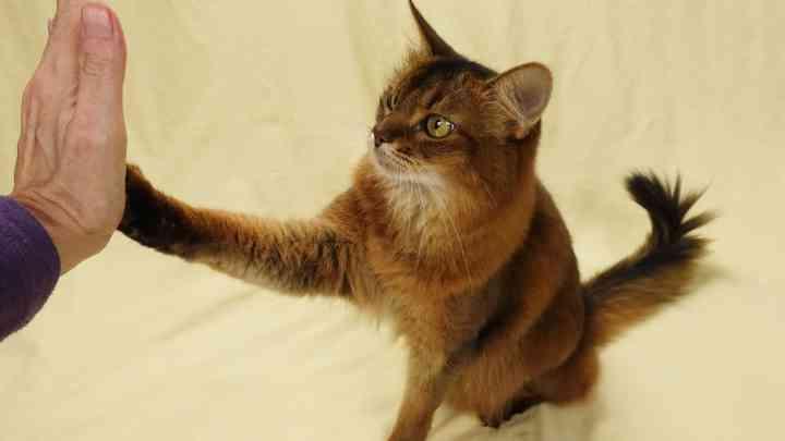 3 trucs faciles pour apprendre à votre chat à faire