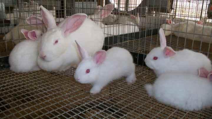 Élever des lapins – Tout ce que vous devez savoir sur l'alimentation, les cages et les soins