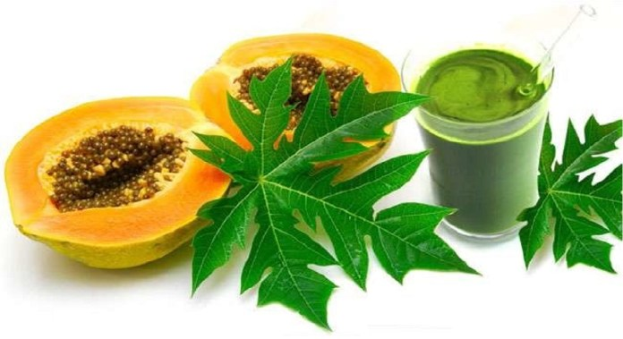 feuille de papaye