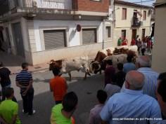 Cabestros a por el toro