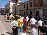 Encierros Domingo de Pentecostés 2011