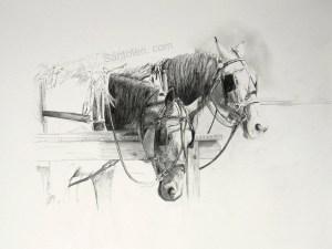Amish Horses Study Santoleri