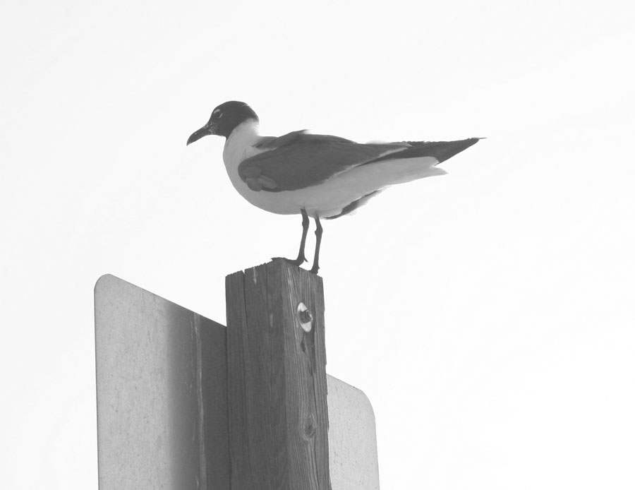 Seagull photo from my archives