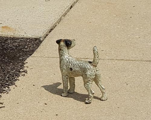 Toy Dog- Santoleri