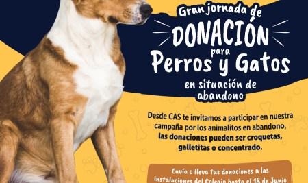 Únete a nuestra campaña de donaciones para perros y gatos en abandono