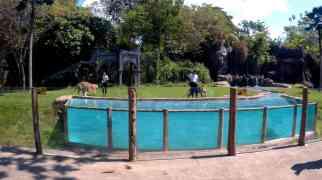 hayvanat01