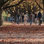alberi e passeggiata