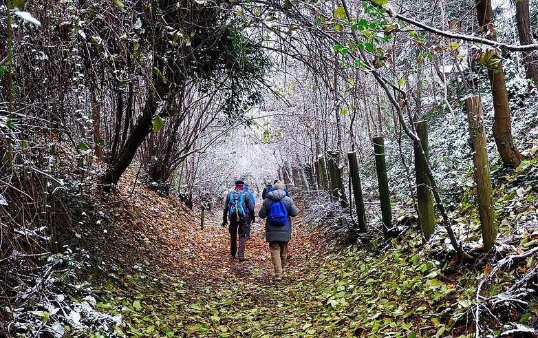 viaggio nel bosco