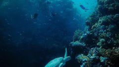 Foto pianeta Oceano