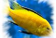 Sapnuoti žuvis