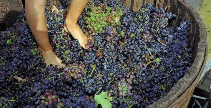 Piggiatura das uvas