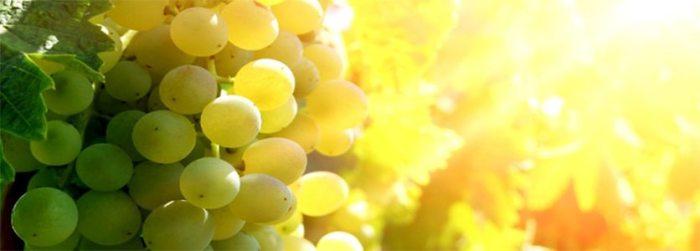 Uvas Brancas1