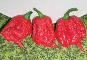 Carolina-Reaper-Pepper-Seeds