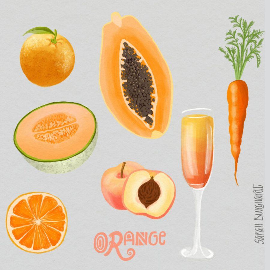 Food Illustration orange