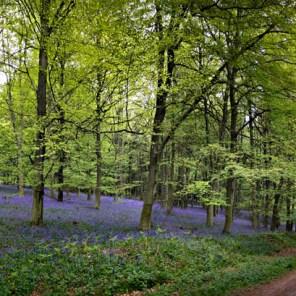 kings-wood-panorama