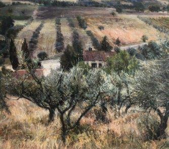 Olive Trees, Tuscany