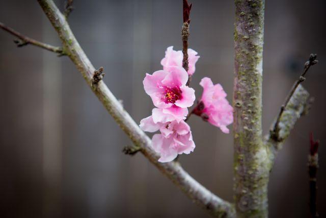 Flower Cherish