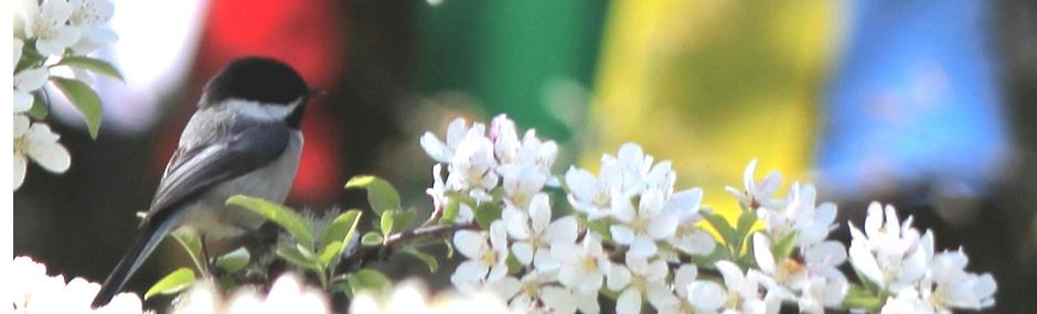 flowerbird-banner-940-2