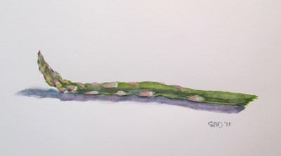watercolor of asparagus