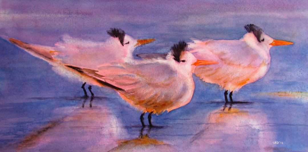 Three Royal Terns