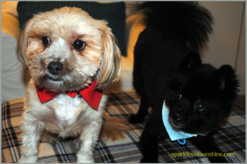 DIY-Recycled-Collar-for-Dogs