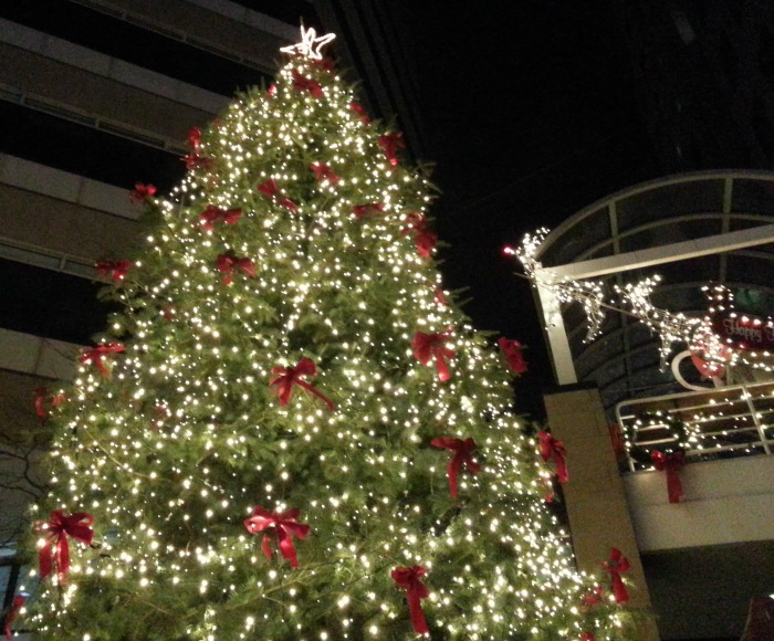 Wordless Wednesday - Tree Lighting
